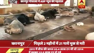 ABP News Impact: CM Yogi seeks report of country's richest Kanpur cow shelter
