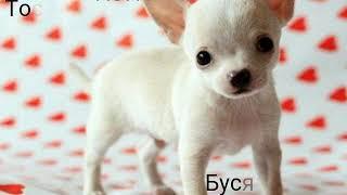 Как назвать щенка?)Имена для щенок разных пород.