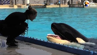 Kasatka the Orca Dies At SeaWorld | The Dodo