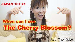 Cherry Bloosoms in Japan : JAPAN 101 : Japan Travel Guide