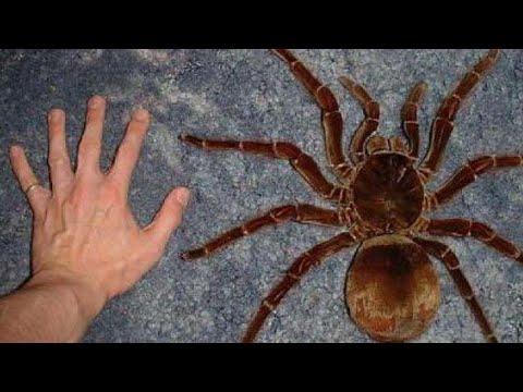 Keşfedilen En Büyük 5 Böcek