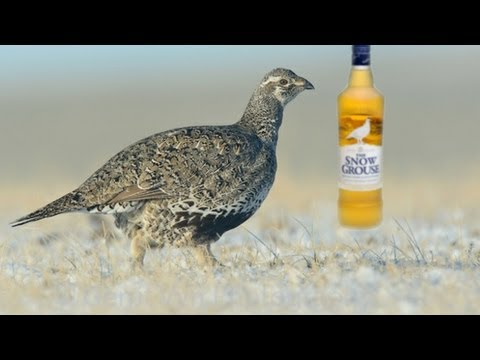 Famous Grouse - The Snow Grouse Scotch Whisky Review