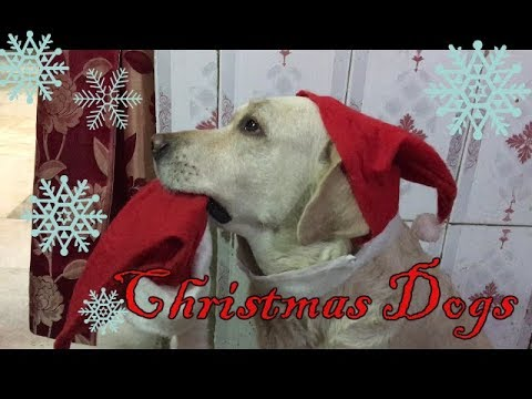 My DOGS CELEBRATE CHRISTMAS | here the guests come | Wildly Indian