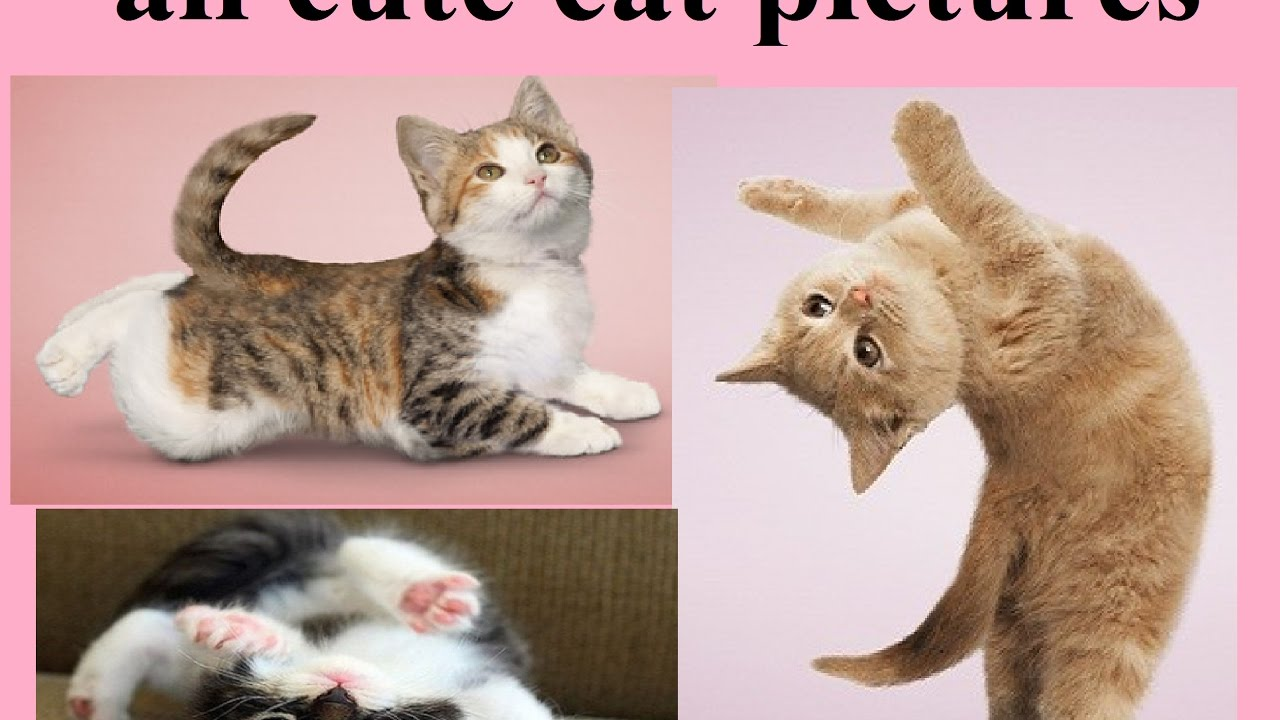 all cute cat pictures cute kitten pictures cutest cat moments