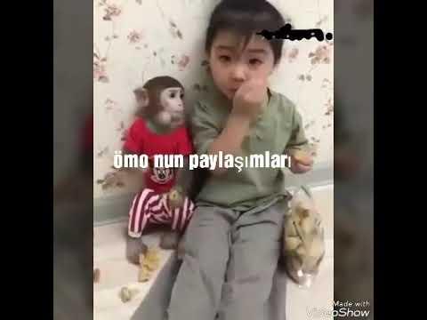 Tatlı Izlemeye Doyulmaz Maymun Ve çocuk