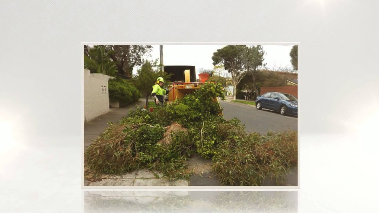 Southside Tree Services - Tree Removal Bayside - YouTube