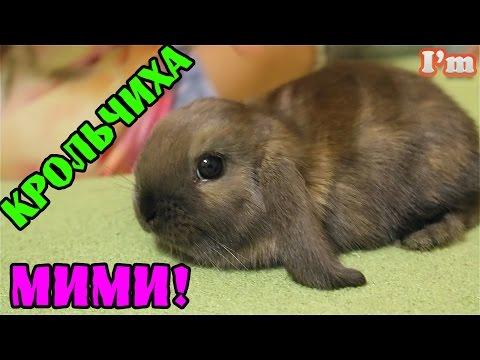 Новое домашнее животное. Покупка кролика! Покупка клетки кролику, еда для кролика.