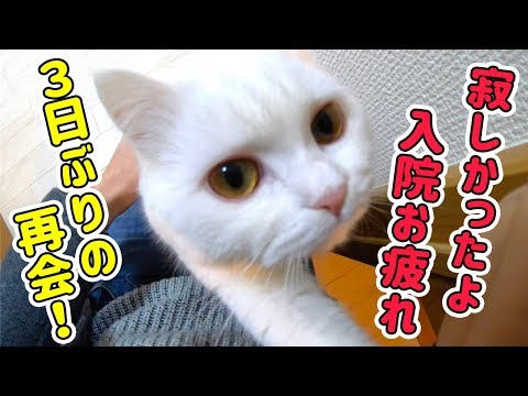 退院して帰ってきた飼い主にひたすら甘える猫が可愛すぎた…!
