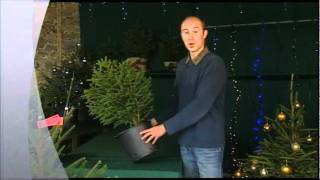 Christmas Trees Planting Pot Plants