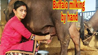 vuclip buffalo milking by hand.. village life vlogs