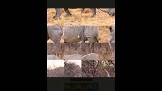 Угадай животное - Уровень 14