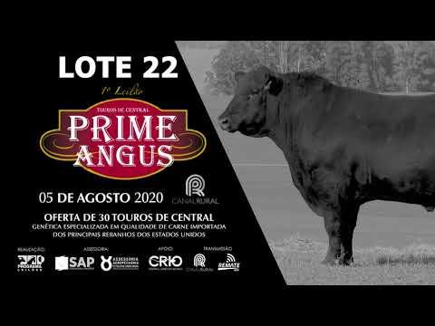 LOTE 22    BLACK OPAL TE918 PORTERHOUSE Prod  Agência El Campo