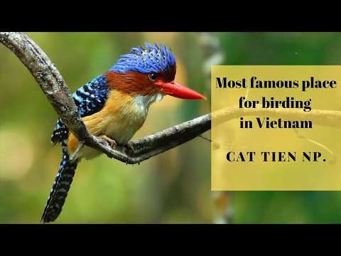 The Best Birding In Vietnam - Cat Tien Np.