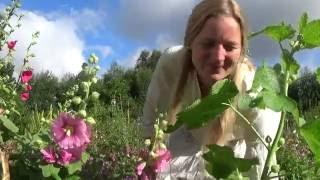 Flower garden tips
