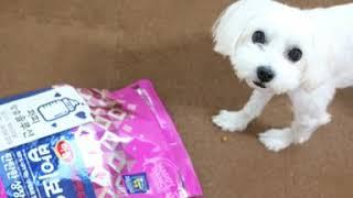 강아지 사료 튼튼한 성장 밥이보약 하림펫푸드 좋네요! …