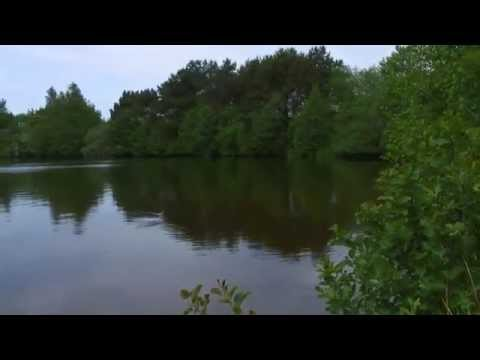 Forellenseen vorgestellt: Trelleborgsee (SH)