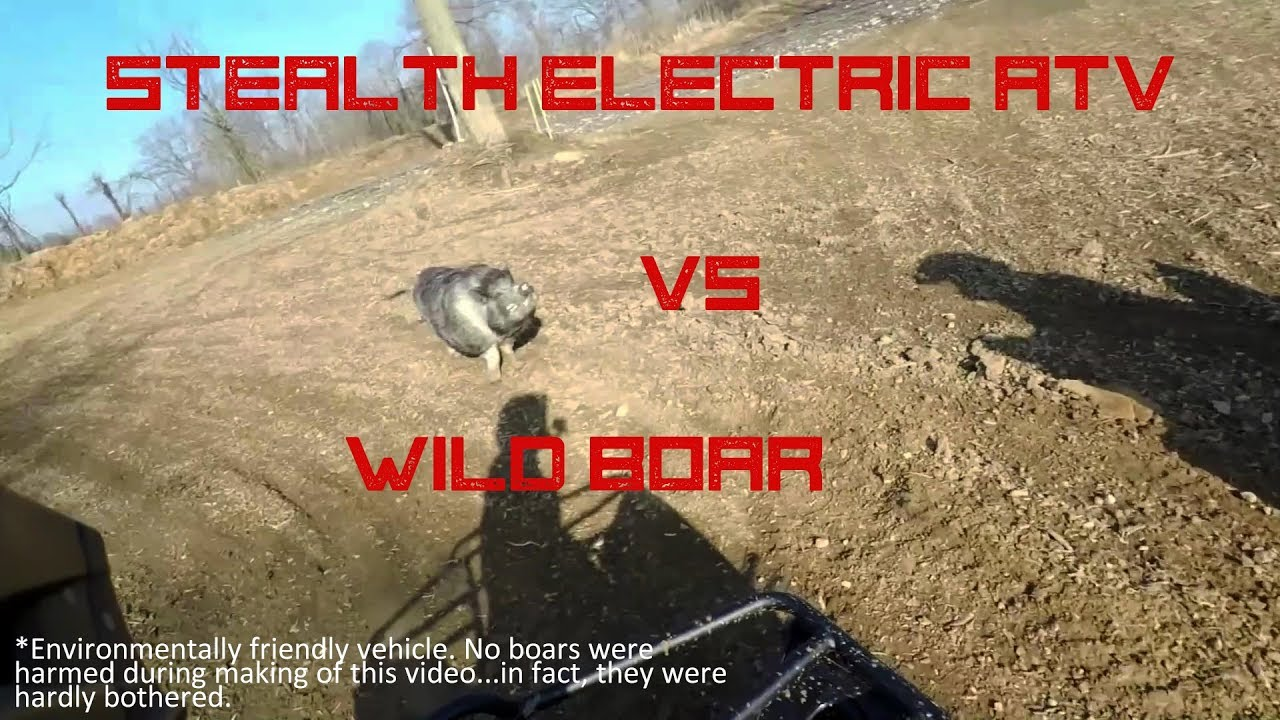 Electric ATV vs Wild Boar - Silence Wins