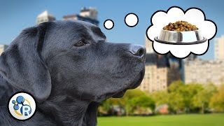 Why Do Wet Dogs Stink? + Other Canine Chemistry