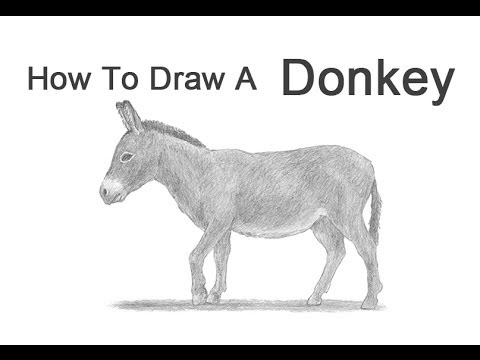 how to draw a donkey youtube