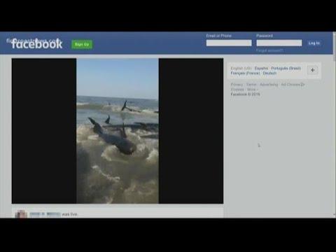 Chumley - Whales beach themselves St Simons Island!