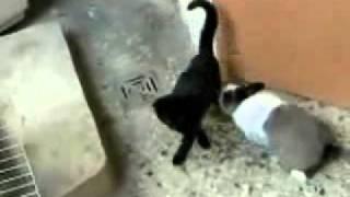 Кошка доигралась.. xDDD