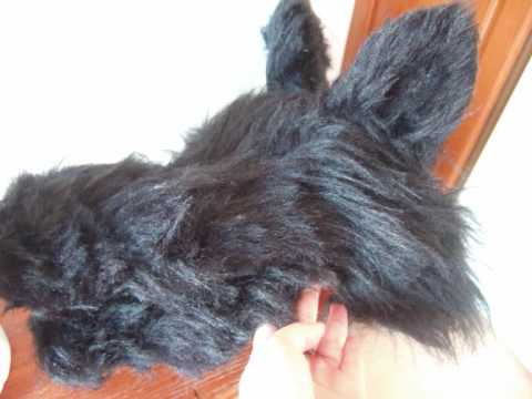 Making a wolf head youtube making a wolf head solutioingenieria Image collections