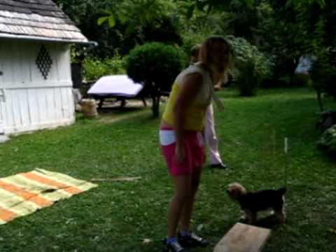 Amy home agility in village Hrabkov (Slovakia)