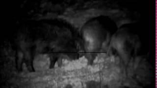 Охота на кабана с вышки с прибором ночного видения