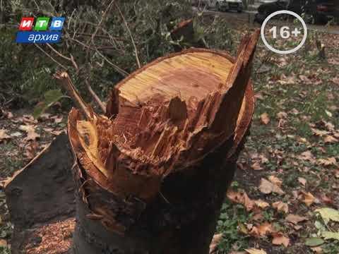 ТРК ИТВ: Деревья в Симферополе спилили из за строительства коллектора