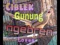 Ciblek Gunung Cigun Gacor Ngebren Untuk Masteran Burung Yg Susah Bunyi  Mp3 - Mp4 Download