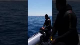I Palombari della Marina Militare disinnescano l'ordigno bellico