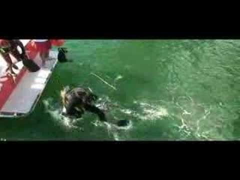 Multi Agency Divers Inspect Long Beach Cruise Ship