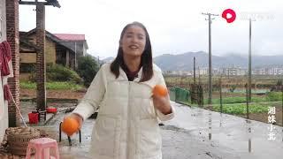【湘妹小北】小北在網上賣家鄉的臍橙,1箱10斤賣66.8元,你覺得貴嗎