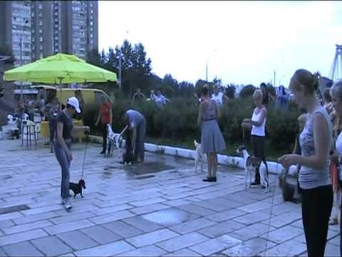 Альянс-шоу-2011 Главный бест Лучшая собака выставки