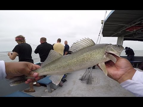 MY FIRST LAKE ERIE WALLEYE CHARTER