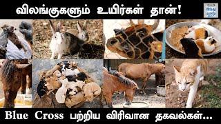 blue-cross-video-chennai-full-video-detail-information-about-blue-cross-hindu-tamil-thisai