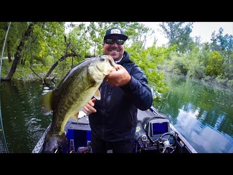 Spinnerbaits doovi for Bed fishing for bass