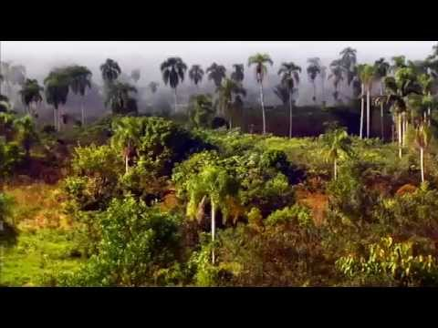 The Nature Conservancy Discovery Channel (I'm Yours)