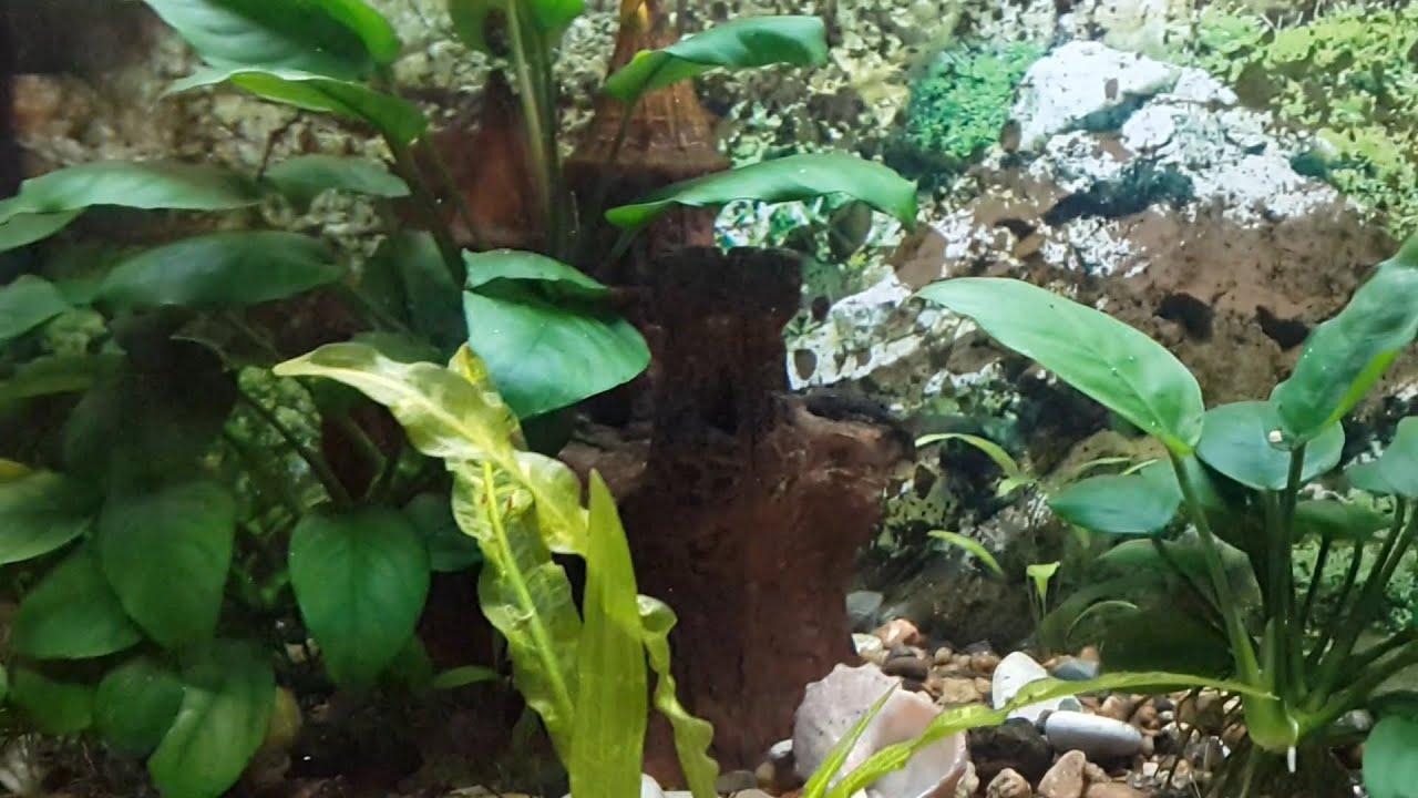 уникальный скребок для чистки аквариума