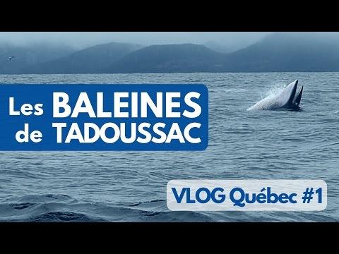On a vu les BALEINES à TADOUSSAC au CANADA - VLOG Québec #1