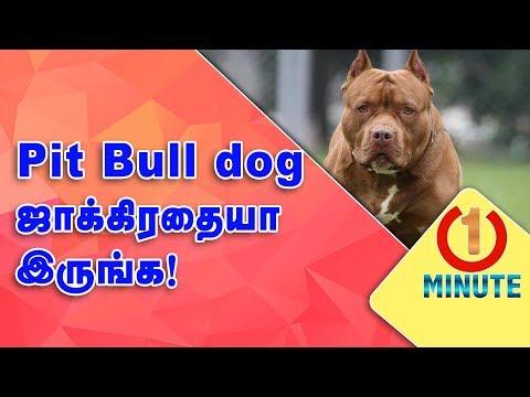 Pitbull Dog attacks children in Delhi