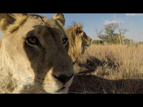Meet The ELEPHANTS | The Lion Whisperer