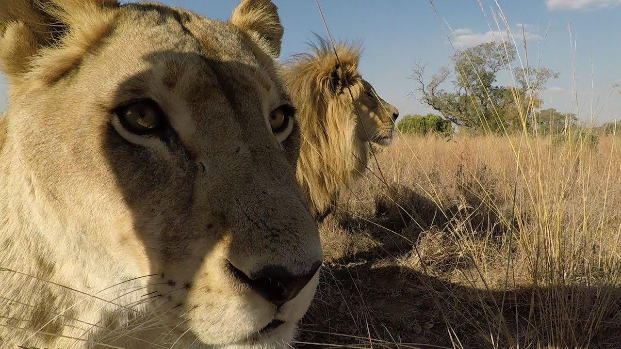 meet-the-elephants-the-lion-whisperer