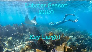 Lobster season 2020 Key Largo
