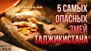 Пять опасных змей Таджикистана, фильм [2017]