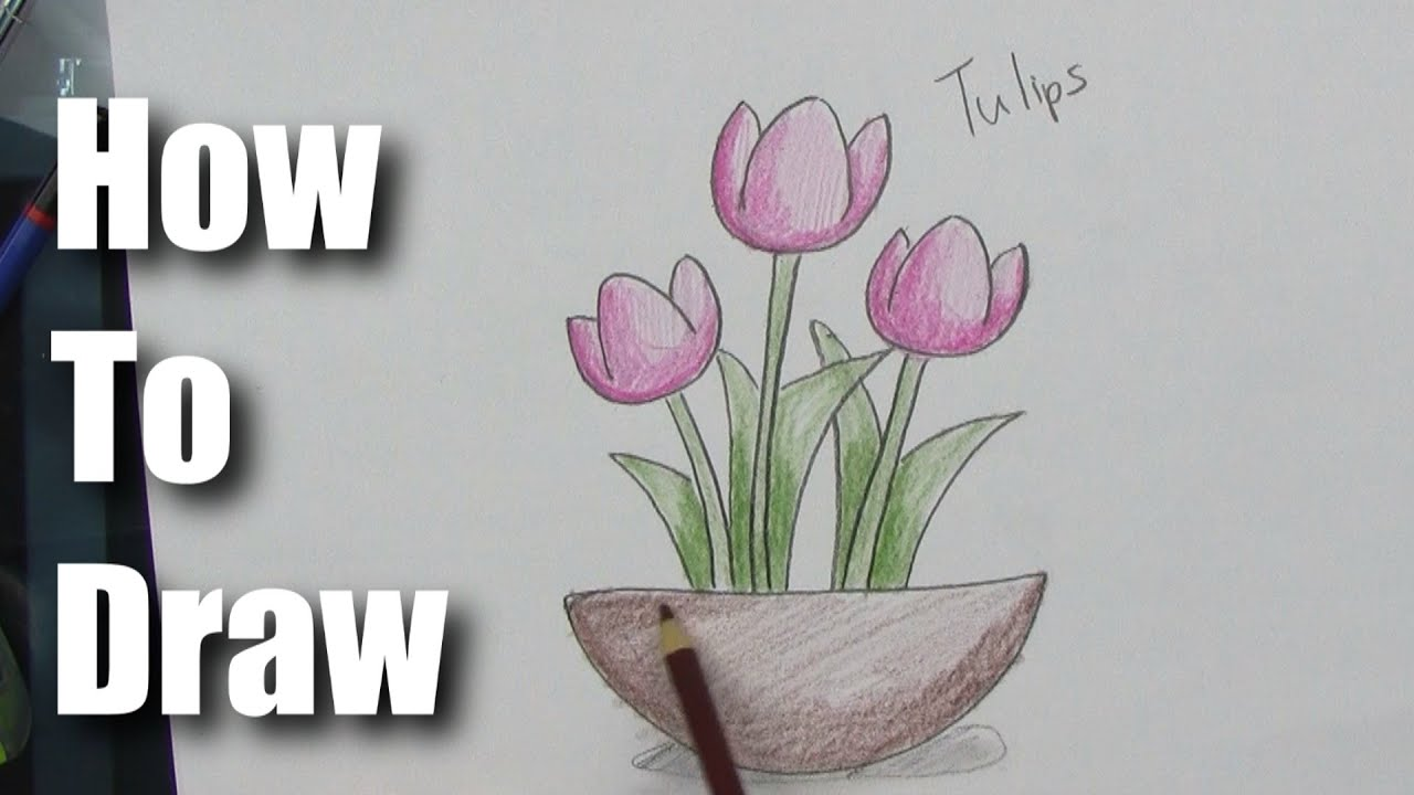 Uncategorized How To Draw A Tulip Easy how to draw easy tulips part 2 coloring and shading youtube