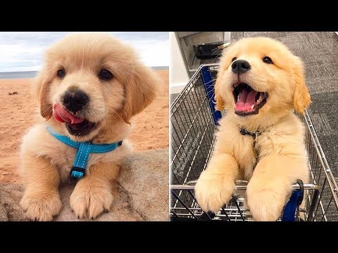 Cute Puppies Doing Funny Things 2020#1  Cutest Dogs