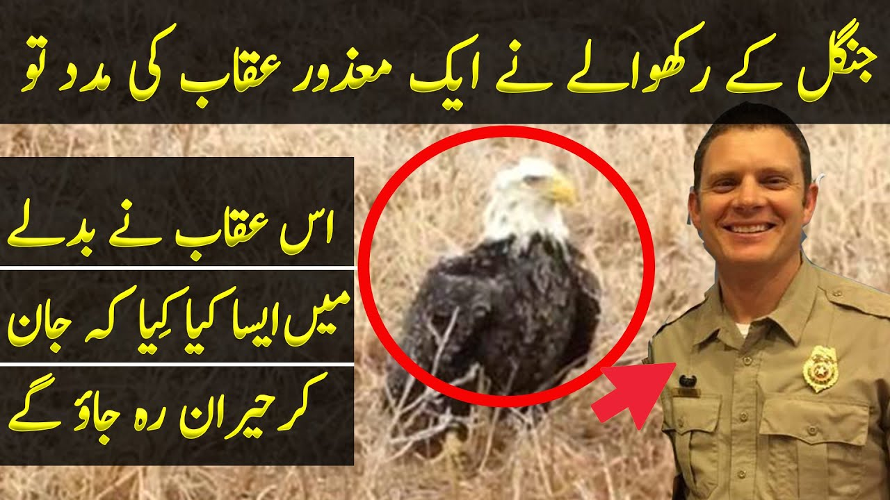 Man Finds Eagle Stranded In Field, And Realizes He's Stuck For The Strangest Reason   TJ Speaks