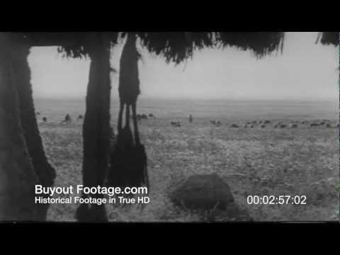 HD Stock Footage Holy Land Palestine Reel 1