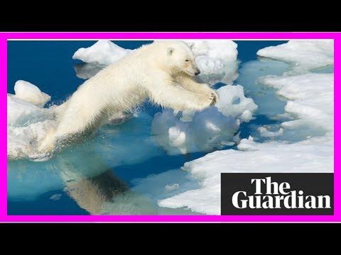 Arctic warming: scientists alarmed by 'crazy' temperature rises